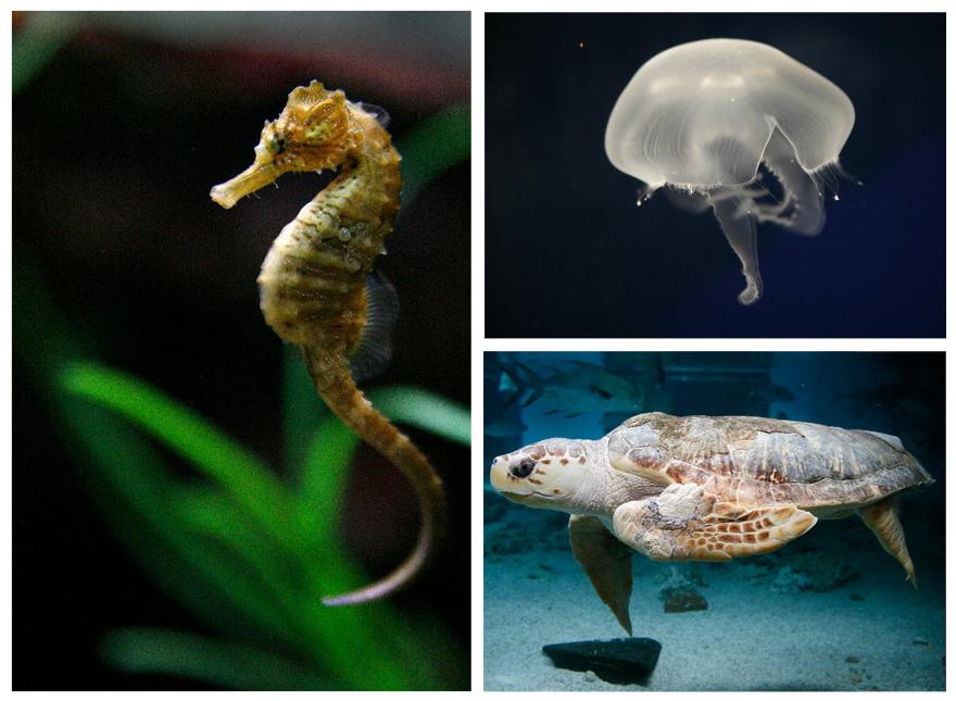 Maritime Aquarium Norw...