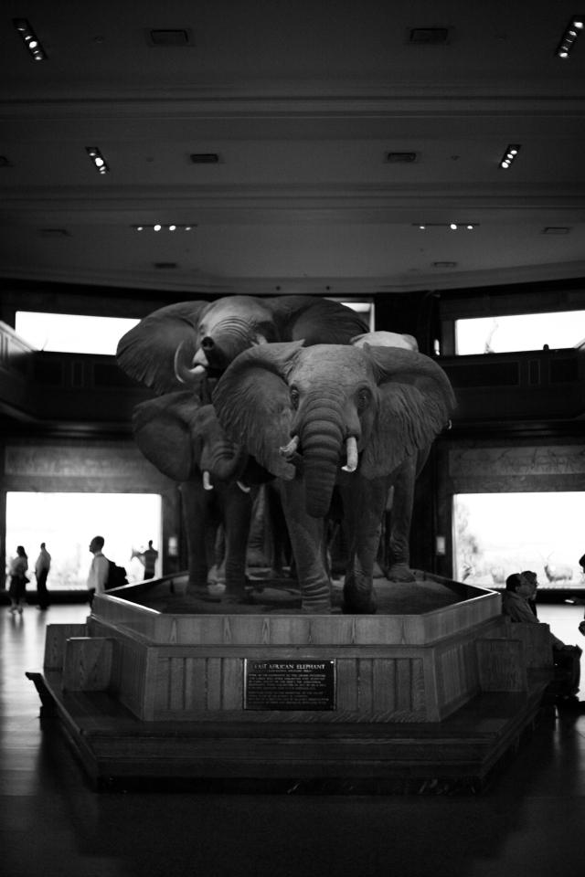 Admission Fee American Museum Of Natural History