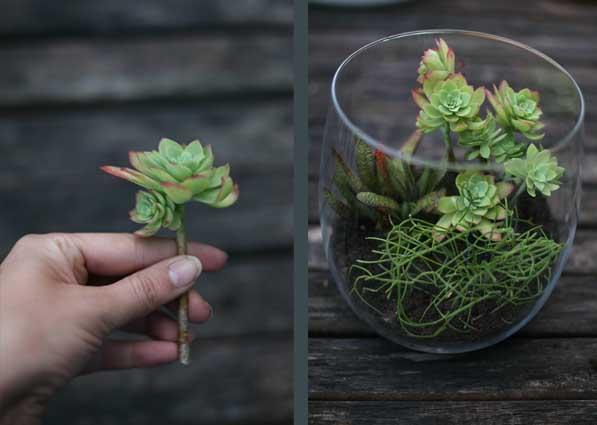Last minute Christmas gift : DIY Terrarium (4/6)